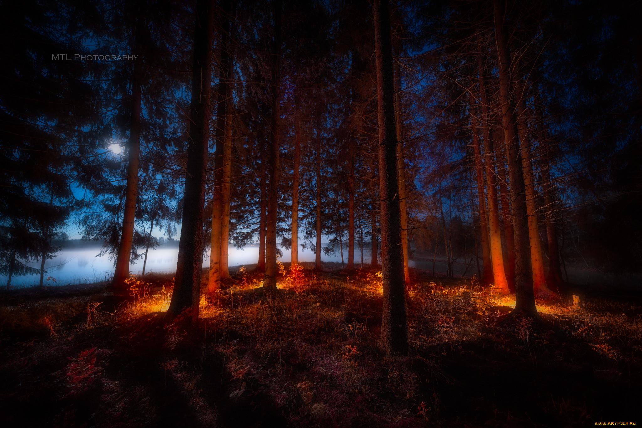 редко свет ночной лес картинки на рабочий его обладатель
